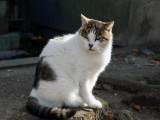 光明寺の猫