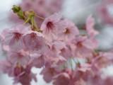 新宿御苑/花園神社